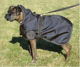 High Neck Dog Rug