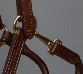 Weanling Halter brown closeup